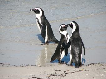 Penguins South Africa Bike Tour