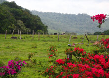 Fields and plant life Costa Rica Bike Tour