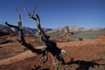 dead tree near St George, Utah