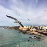 Seagull and shore view Morocco Bike Tour