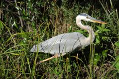 Bird seen during Florida Everglades and the Keys Bike Tour