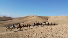Camel riding in desert Morocco Bike Tour