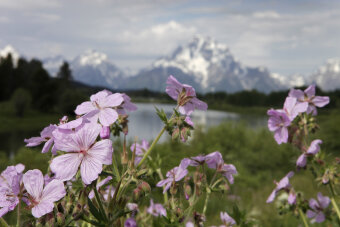 Pink Flowers seen during Idaho Teton Valley Bike Tour