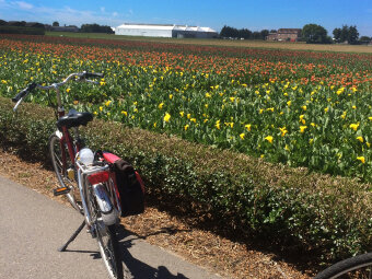 Flower fields seen during Holland Bike and Barge Bike Tour