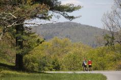 Forest Blue Ridge Bike Tour