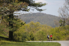 Forest Blue Ridge Bike Tour