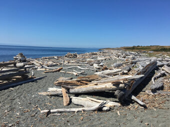 wood filled beach Washington San Juan Islands Bike Tour