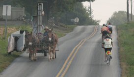 Horse and buggy on bike path Pennsylvania Dutch Country Bike Tour