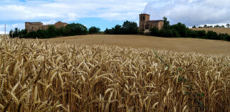 wheat field Spain Camino de Santiago bike tour