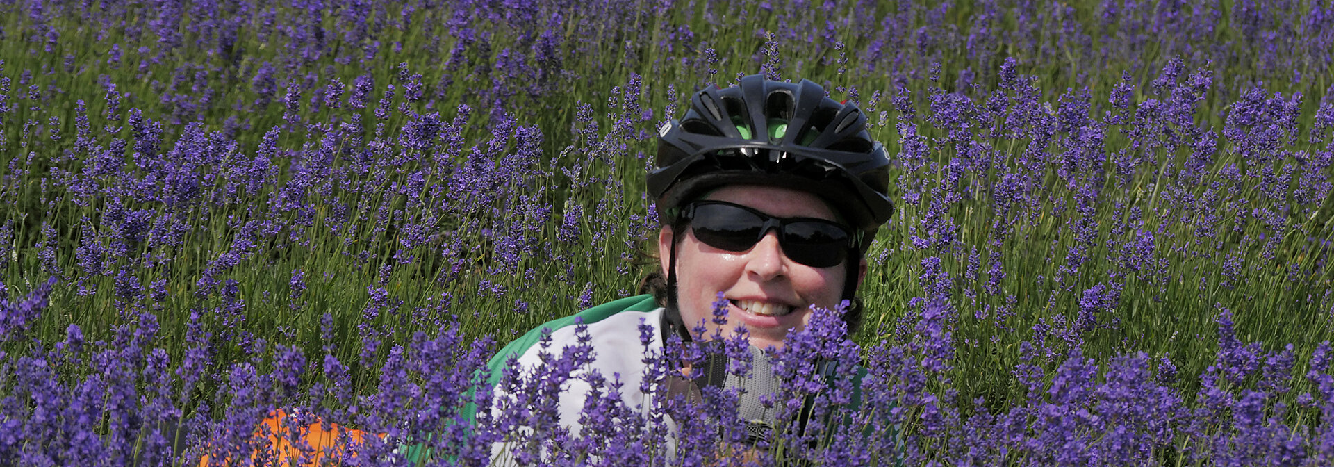 Shannon Roddy in the lavender on Washington Island Door County