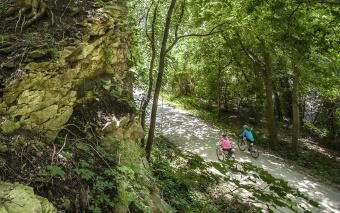 Forest Path view Katy Trail Bike Tour