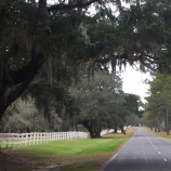 View of white picket fence and spanish moss covered oak trees that you'll see during our South Carolina Low Country bike tour.